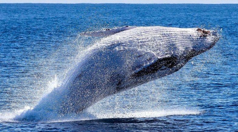 pcb mata ballenas