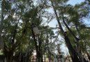 Trabajos en el arbolado del parque Illia