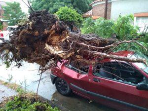 Árbol cayó sobre auto en Pasaje Vergara 45
