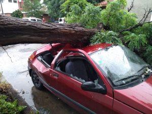 Vehículo impactado por árbol