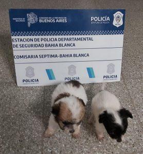 Rescataron perros abandonados en Bahía Blanca