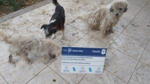Perros rescatados en Nueva Belgrano
