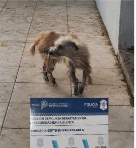 Rescate de perro de una vivienda bahiense