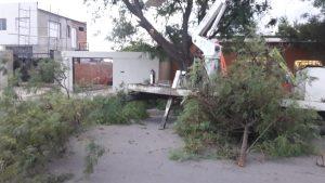 Caída de árbol en Zapiola al 3000